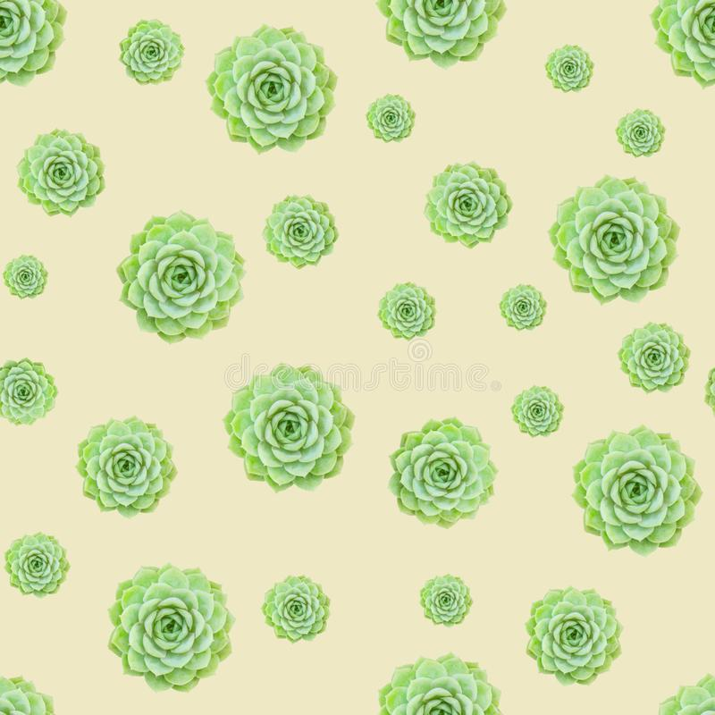 Fondo giallo-chiaro del modello succulente verde della pianta fotografia stock