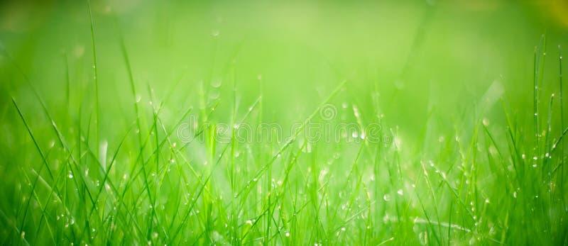 Fondo granangular de la hierba verde, foco selectivo imagen de archivo