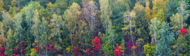 Fondo grande largo colorido del panorama del follaje del bosque del otoño imagen de archivo libre de regalías