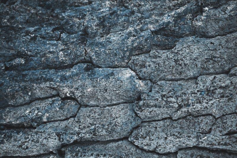fondo grigio approssimativo incrinato della corteccia di albero immagine stock