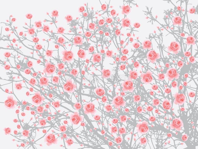 Fondo grigio chiaro del fiore di ciliegia dell'albero di sakura di rosa della piena fioritura illustrazione di stock