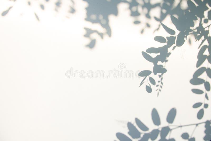 Fondo gris abstracto de la sombra de hojas naturales en la textura blanca para el fondo imagen de archivo