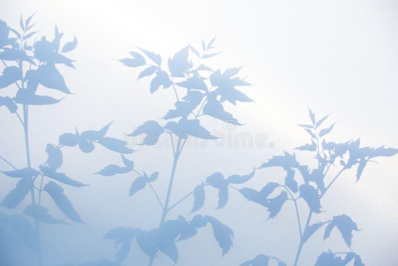 Fondo gris abstracto de la sombra de hojas naturales en la textura blanca para el fondo foto de archivo libre de regalías