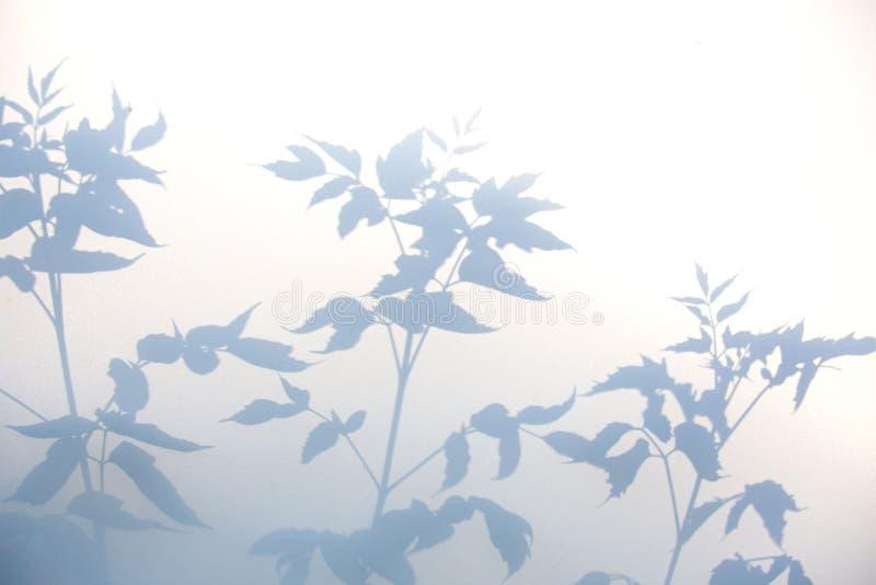 Fondo gris abstracto de la sombra de hojas naturales en la textura blanca para el fondo fotografía de archivo
