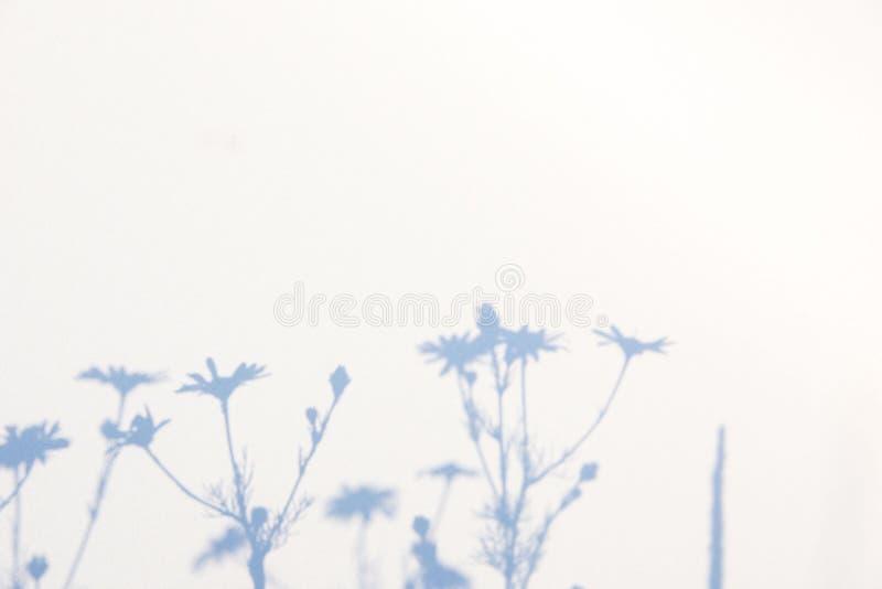 Fondo gris abstracto de la sombra de hojas naturales en la textura blanca para el fondo imagenes de archivo