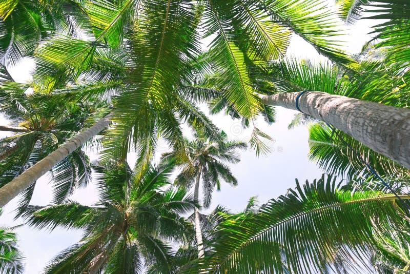 Fondo hermoso con las palmeras tropicales imagenes de archivo