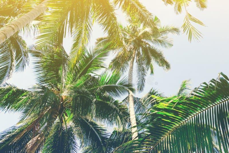 Fondo hermoso con las palmeras tropicales Opinión de debajo hacia arriba sobre las palmeras contra el cielo fotos de archivo libres de regalías
