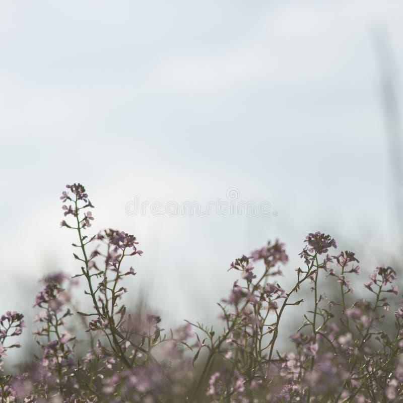 Download Fondo Hermoso De La Falta De Definición Del Defocus Con Las Flores Blandas Foto de archivo - Imagen de fondo, arreglo: 44850094