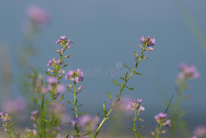 Download Fondo Hermoso De La Falta De Definición Del Defocus Con Las Flores Blandas Imagen de archivo - Imagen de belleza, botánica: 44850097