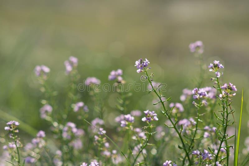 Download Fondo Hermoso De La Falta De Definición Del Defocus Con Las Flores Blandas Foto de archivo - Imagen de latvia, aroma: 44850108