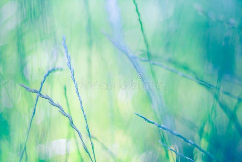 Fondo hermoso de la hierba del extracto del primer Fondo borroso de la hierba verde y luz del sol suave imagenes de archivo