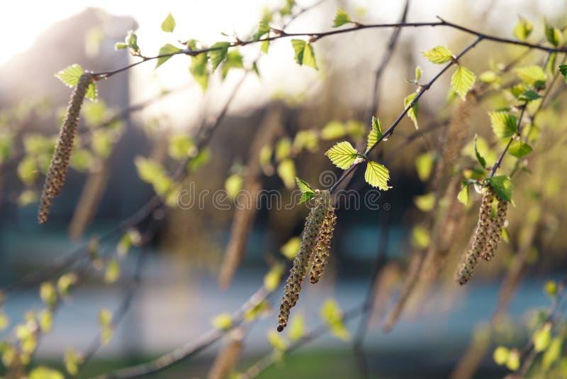 Fondo hermoso de la naturaleza E fotos de archivo