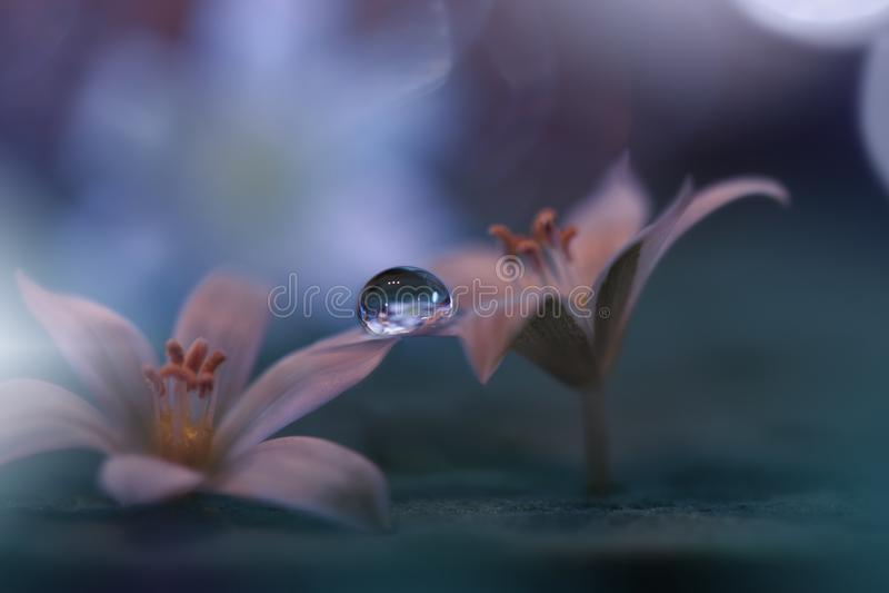 Fondo hermoso de la naturaleza Papel pintado art?stico abstracto Art Macro Photography Apenas llovido encendido Descenso del agua fotos de archivo