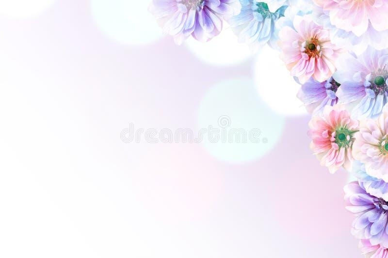 Fondo hermoso de la naturaleza de la primavera con el flor, el p?talo y el bokeh en fondo rosado Capítulo de la flor foto de archivo