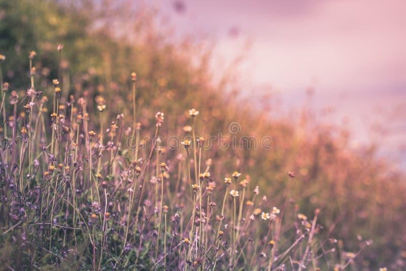 Fondo hermoso de la primavera o de la naturaleza del verano con la hierba fresca imagenes de archivo
