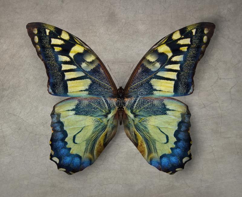 Fondo hermoso de la textura de la exhibición de la mariposa del vintage fotos de archivo libres de regalías