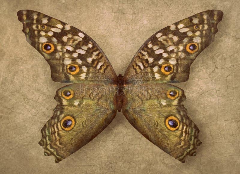 Fondo hermoso de la textura de la exhibición de la mariposa del vintage foto de archivo libre de regalías