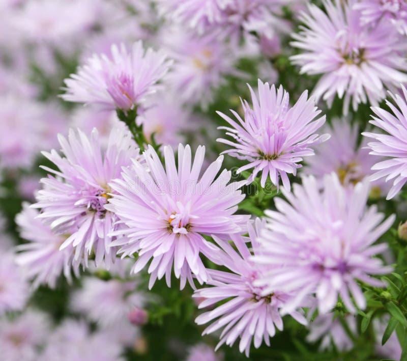 Fondo hermoso de las flores fotos de archivo libres de regalías