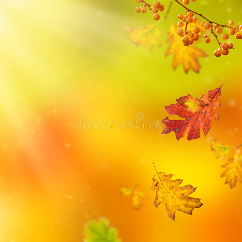 Fondo hermoso del otoño imágenes de archivo libres de regalías