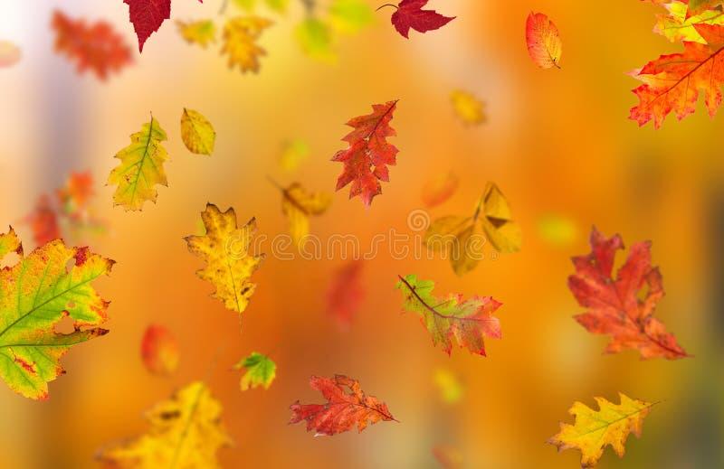 Fondo hermoso del otoño fotos de archivo libres de regalías