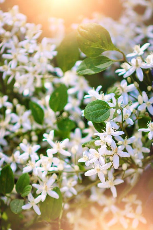 Fondo hermoso del verano con las pequeñas flores blancas Tono caliente Fotograf?a vertical imagen de archivo