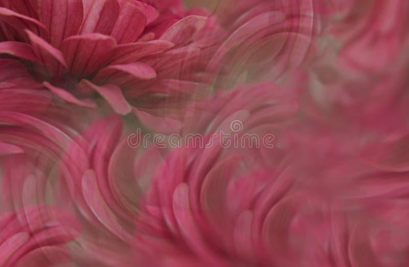 Fondo hermoso rojo floral Composición de la flor Los pétalos de flores alrededor de la cara del ` s de la muchacha Tarjeta de fel imagenes de archivo