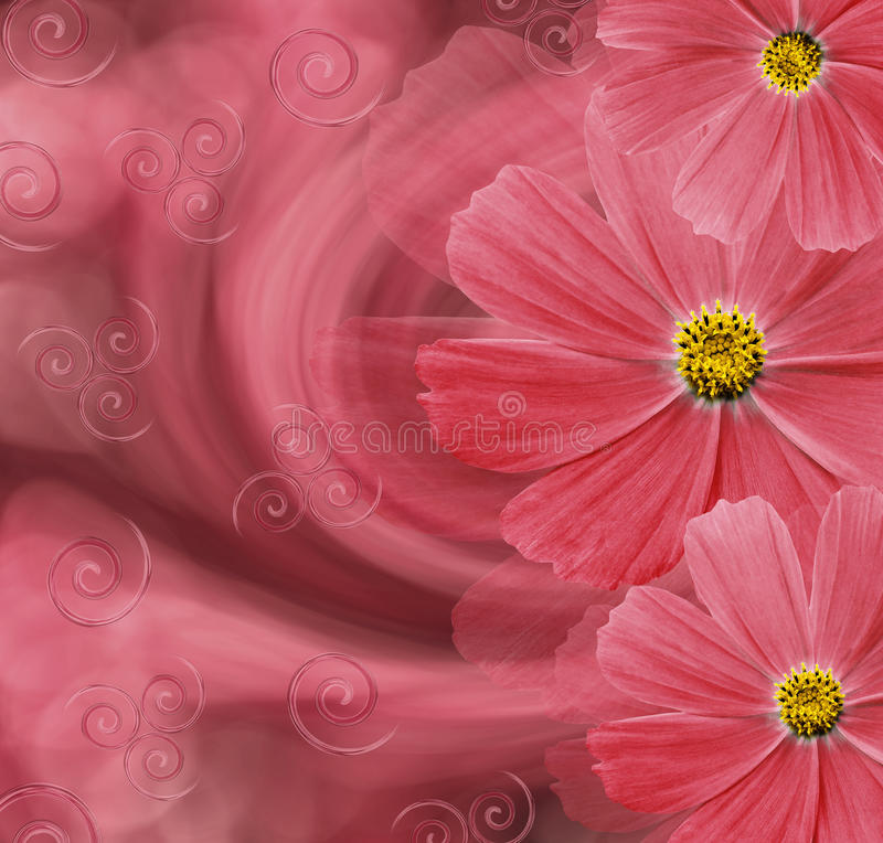 Fondo hermoso rojo floral Composición de la flor Postal con las flores rojas de margaritas en un fondo rosado fotos de archivo libres de regalías