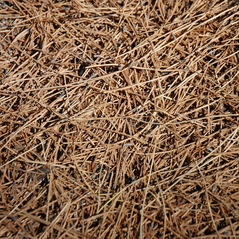 Fondo - hierba secada foto de archivo libre de regalías