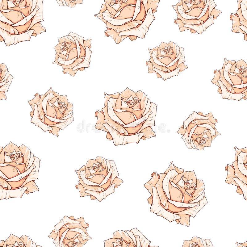 Fondo inconsútil dibujado de las rosas beige aislado en blanco Florece vista delantera del ejemplo Modelo en el estilo romántico  libre illustration