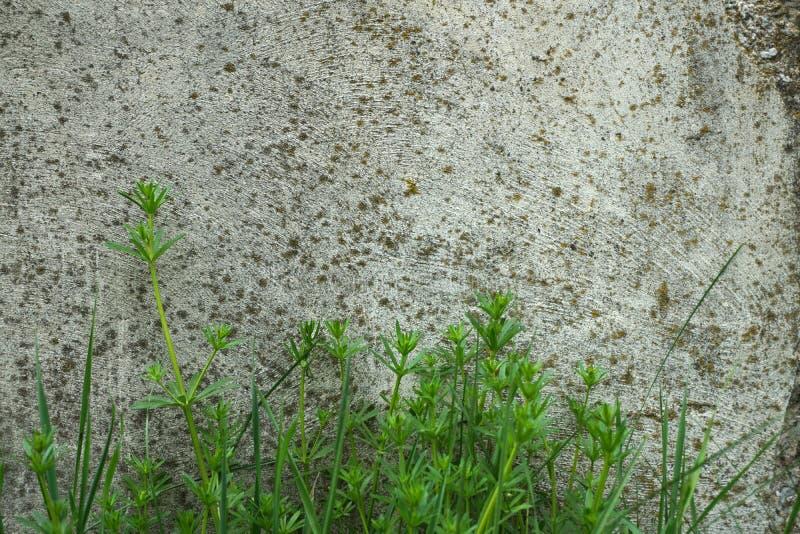 Fondo industrial Hierba verde que crece de la parte inferior del fotos de archivo