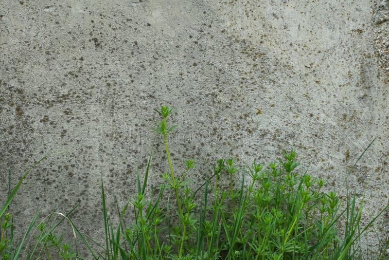 Fondo industrial Hierba verde que crece de la parte inferior del foto de archivo