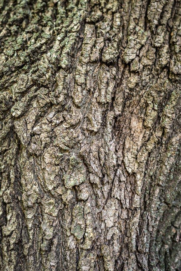 Fondo La Textura De La Corteza De Un árbol En General Enmarca Marco ...