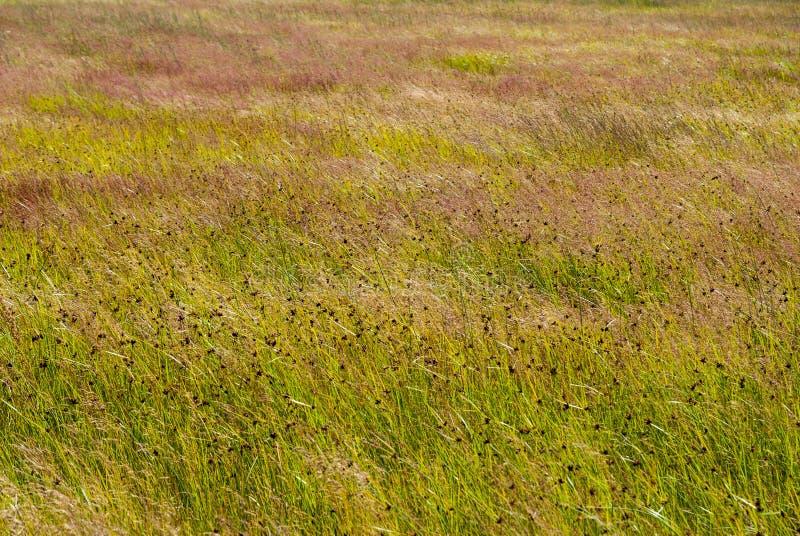 Fondo a lamella dell'erba fotografie stock libere da diritti