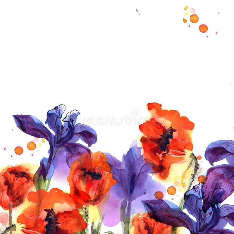 Fondo lindo de la flor de la acuarela con las amapolas y los iris en colores brillantes stock de ilustración