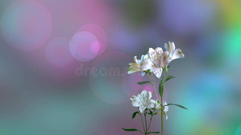 Fondo luminoso con i fiori bianchi immagine stock