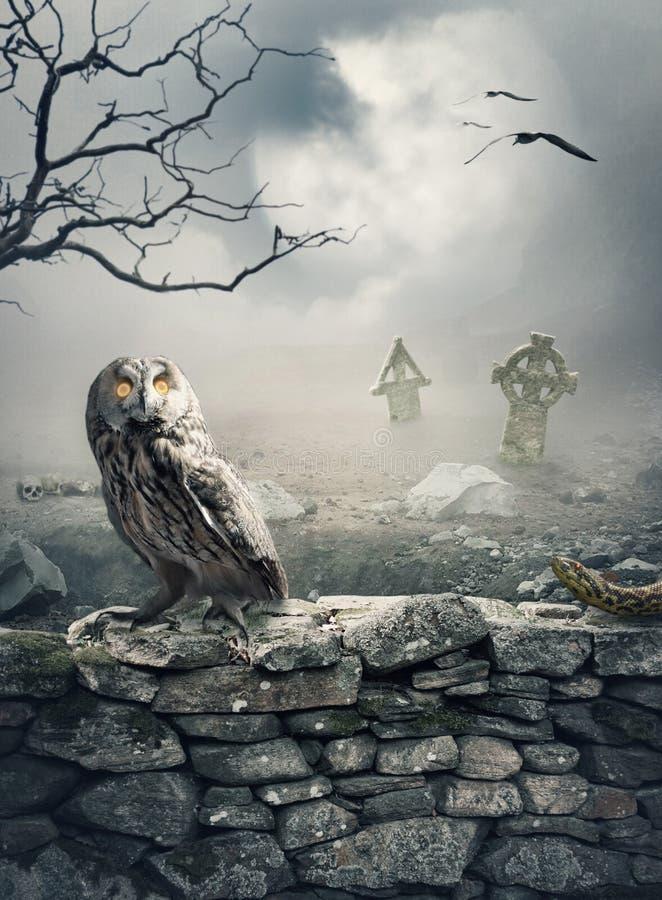 Fondo místico de Halloween con el búho en la pared de piedra imágenes de archivo libres de regalías
