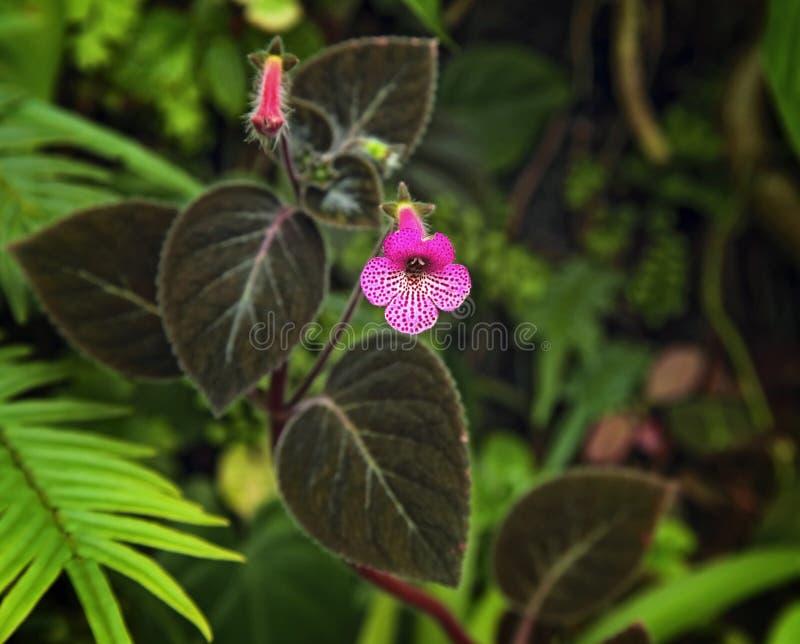 Fondo macro de la flor violeta foto de archivo libre de regalías
