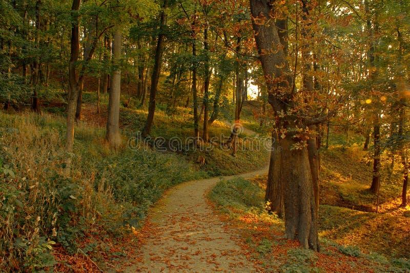 Fondo magico della foresta di autunno immagine stock