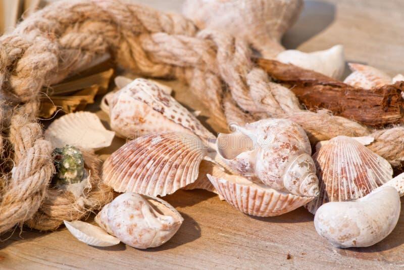 Fondo marítimo con las conchas marinas y la vieja cuerda imagen de archivo libre de regalías