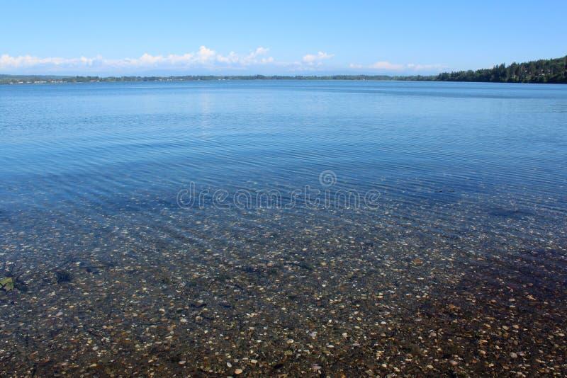 Fondo marino sotto chiara acqua al porto di Drayton, Blaine, Washington immagine stock