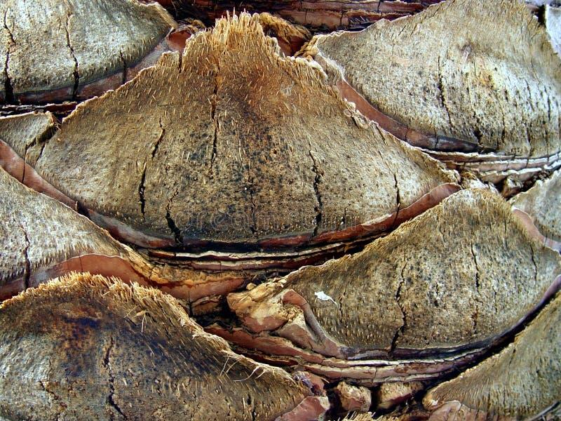 fondo marrón de la corteza foto de archivo
