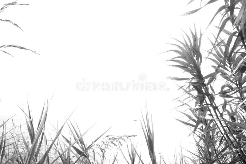 Fondo minimalista di estate, in bianco e nero fotografie stock