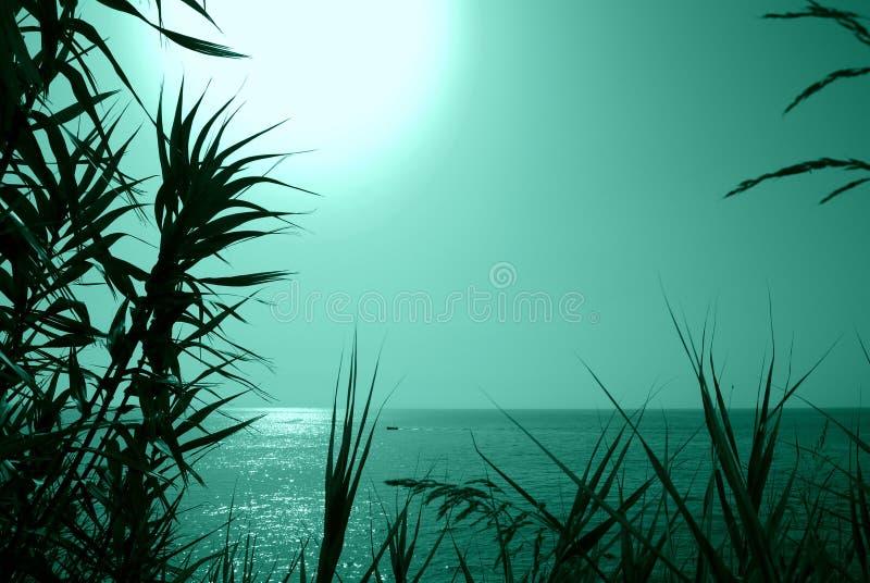 Fondo minimalista di estate, tramonto scintillante sul tono verde immagini stock