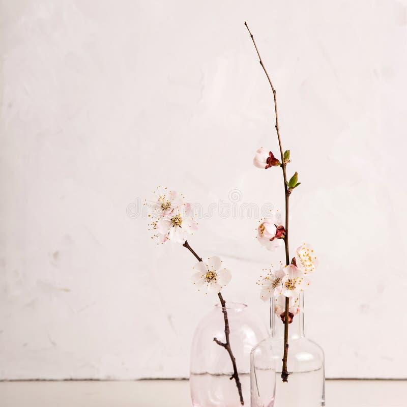 Fondo minimalistic ligero neutral de la primavera con las flores blancas en las ramas fotos de archivo