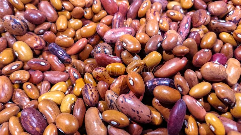 Fondo multicolor de la semilla de la haba con el espacio de la copia imagen de archivo