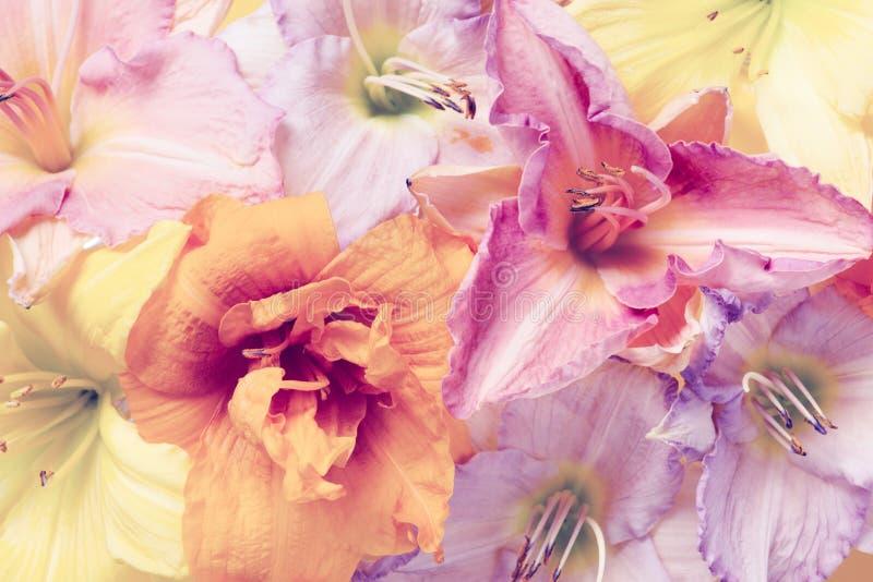 Fondo multicolor en colores pastel blando de flores fotos de archivo libres de regalías