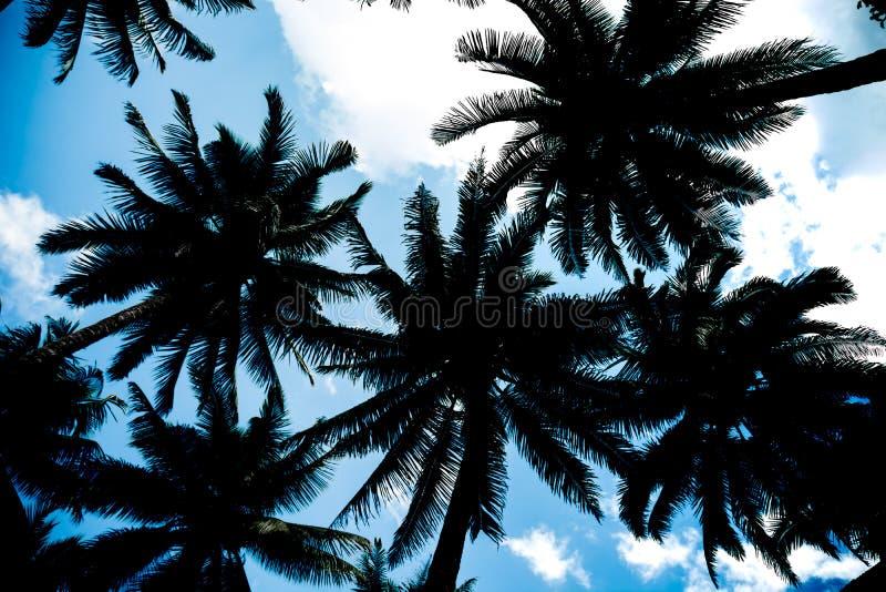 Fondo, natura, albero, struttura del cocco della siluetta per le sedere fotografie stock