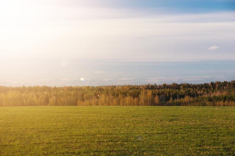 Fondo natural abstracto Campo de la primavera con el bosque y sol que brilla fotografía de archivo libre de regalías