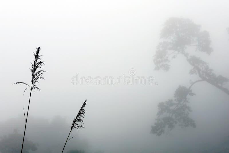 Fondo natural abstracto con espigas y silueta de árbol en la niebla imagen de archivo