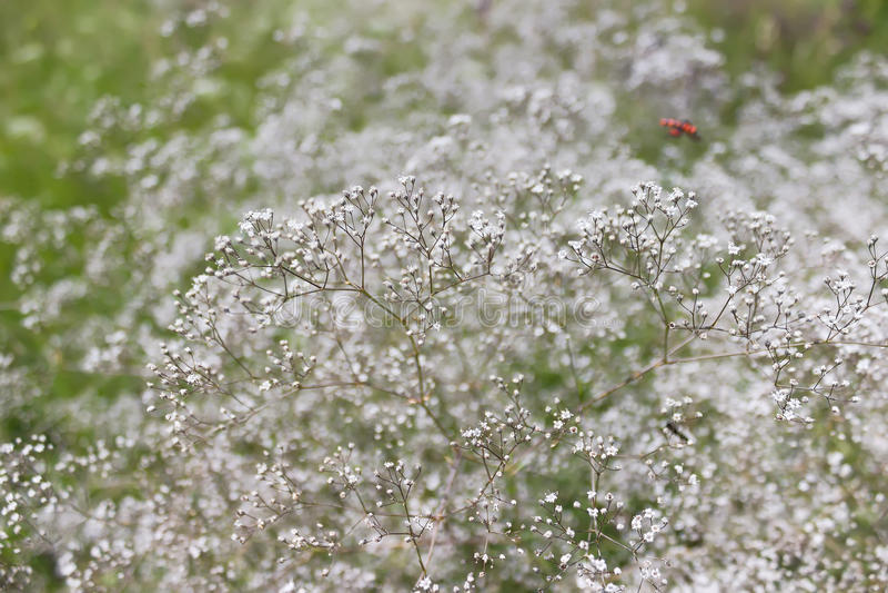 Fondo natural abstracto, mala hierba de la planta en campo foto de archivo libre de regalías